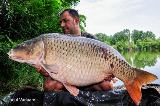 ADRIAN RADUCA | 29.4kg