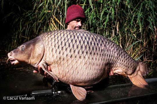 ANDREI COLOTELO | 32.2kg