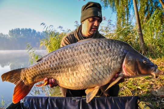 COSTEL PREOTESCU | 20.4kg | November 2015