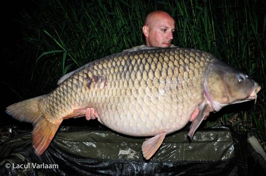 CRISTIAN GHEORGHE | 28kg