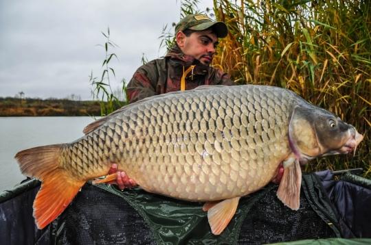 DANUT SARBU | 26,3kg | noiembrie 2016 | A6