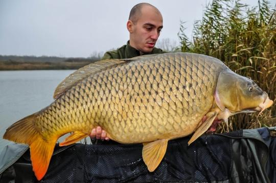 GABI CALIN | 20,6kg | noiembrie 2014