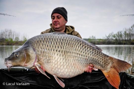 MIRCEA COMAN | 26.4kg