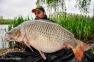 DANUT SIRBU | 26kg