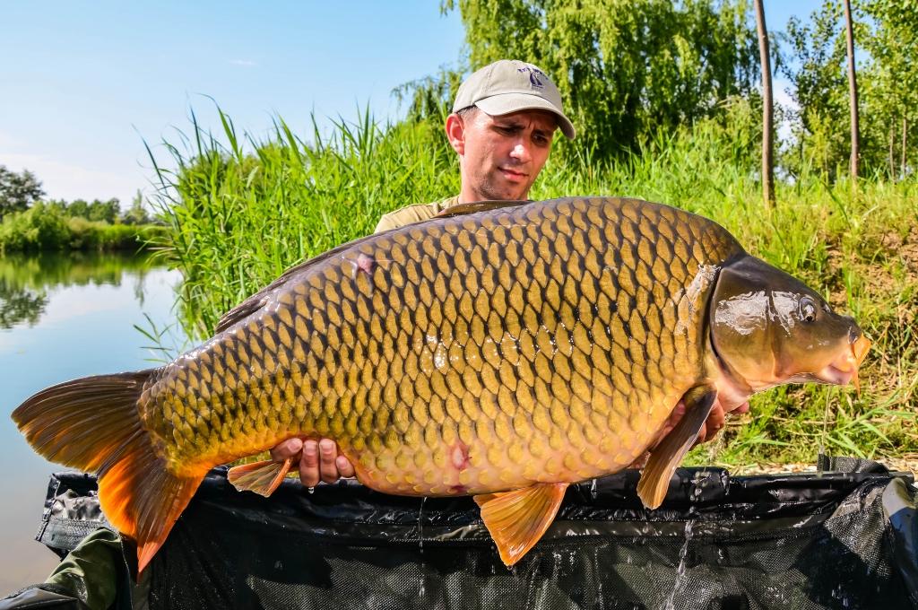 ANDREI COLOTELO | 20kg | iunie 2014