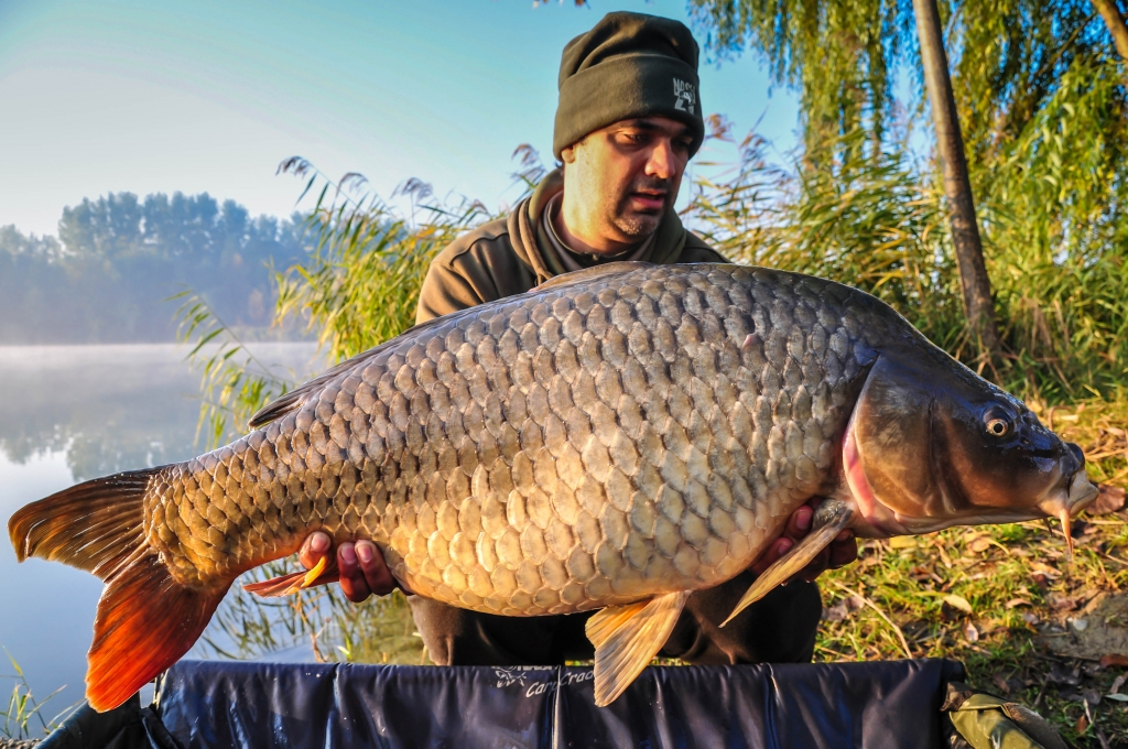 COSTEL PREOTESCU | 20,4kg | noiembrie 2015