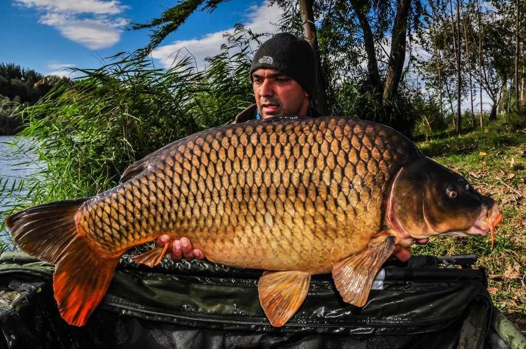 COSTEL PREOTESCU | 21,3kg | octombrie 2016 | A7