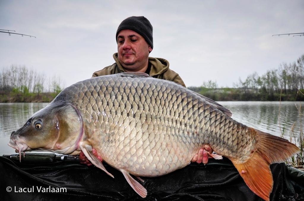 MIRCEA COMAN | 26,4kg