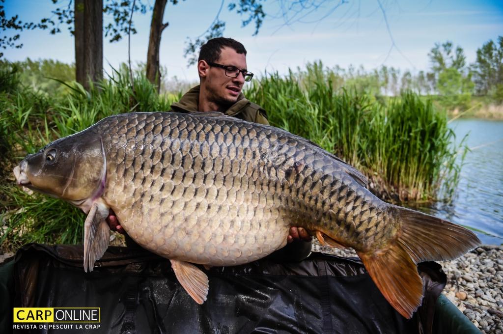 MIRCEA FAUR | 32kg